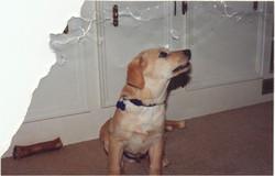 Dog_homer_puppy_01