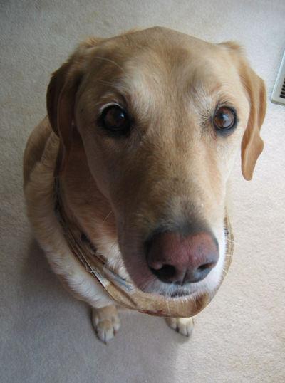 Dog_homers_nose_02