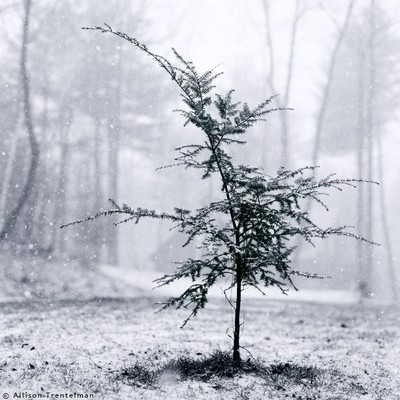 11_07_little_tree_il_fullxfull145_2